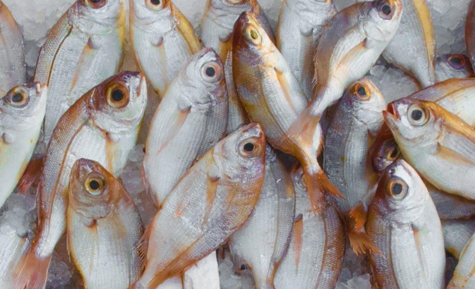 vismarkt veere